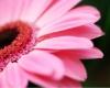 C} PIC flower  07