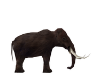 WOOLLY MAMMOTH FURNITURE