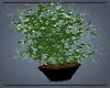 Cannabis Vase Plant
