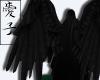 Aoi | Fallen Wings