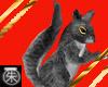 }T{ Gray  Squirrel