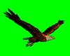 [AR]Flying Eagle