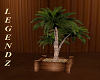 Indoor/ Patio Palm