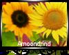 AM:: Sunflowers Enhancer