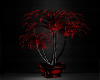 Ambient Red Plant2