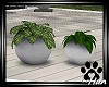 Paws Rescue Plants