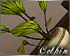 :C: DOWN TOWN PLANT