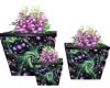 passion plant Decor