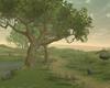 Senja Tree