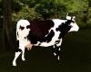 Dj Light Cow & Sound