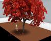maple tree swing