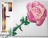F - Rose M/F