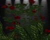 Deep Red Rose Vine