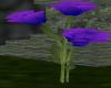 Blue/Violet Rose