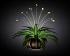 ~MG~ Budding Plant