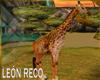 c jirafa