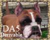 (A) Boxer Dog