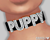 *N Puppy Choker Black
