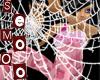 SpiderWeb transparentBG
