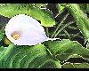 Floracapes solitude