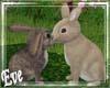 c GreenHouse Rabbits