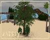 Island Escape Trees