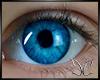 Baby Blue Eyes CC