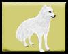 Dp Wht Wolf