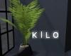 """"""" Attic Plant"""