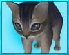 Kitten Cat Cuddle