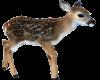 TF* Baby Deer