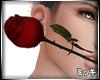 ! Valentine Rose