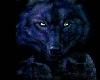 DA ~ Wolf Picture 4