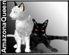 Cats black & white