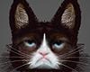 !! Grumpy Cat !! =^n^= M