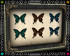 {D}ButterflyFrame 3