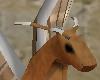 Miniature Pegasus !!!