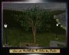 SC  Birch Tree