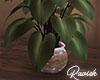 Wangs Plant