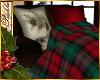 I~Cozy PineBlanket Chair