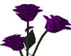 Valentine Purple Roses