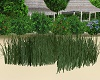 Animated Tall Grass