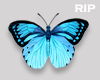 R. Butterfly animated