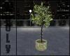 Ani. plant w light