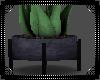S Aloe Plant