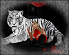 Tiger resting2