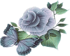 Blue Rose Butterfly
