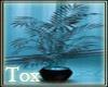 Aqua plant