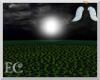 EC| Black Rose Field II