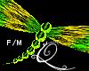 Qae|GrnYlw Dragonfly F/M